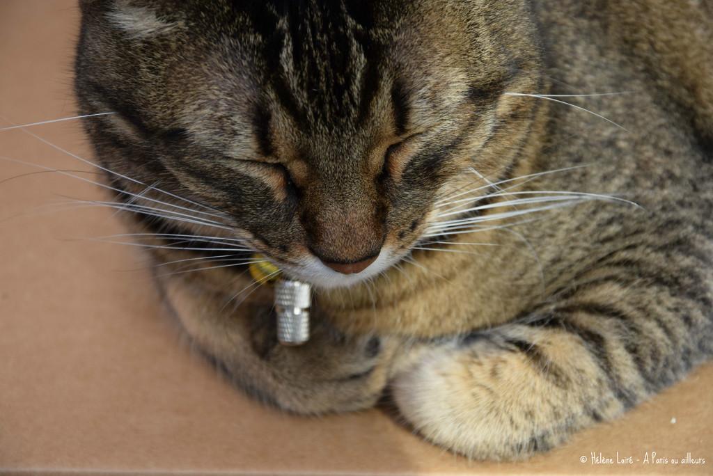 nap on a big box  by parisouailleurs