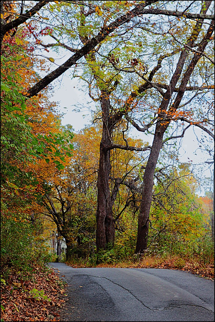 A Path of Autumn Color by olivetreeann