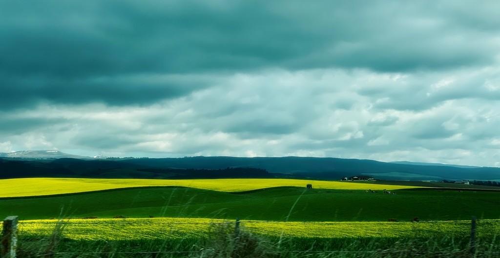 Spring crops by maggiemae