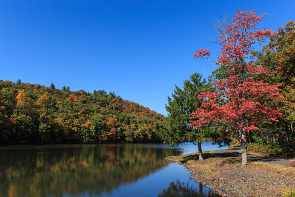 More Fall colors. by batfish
