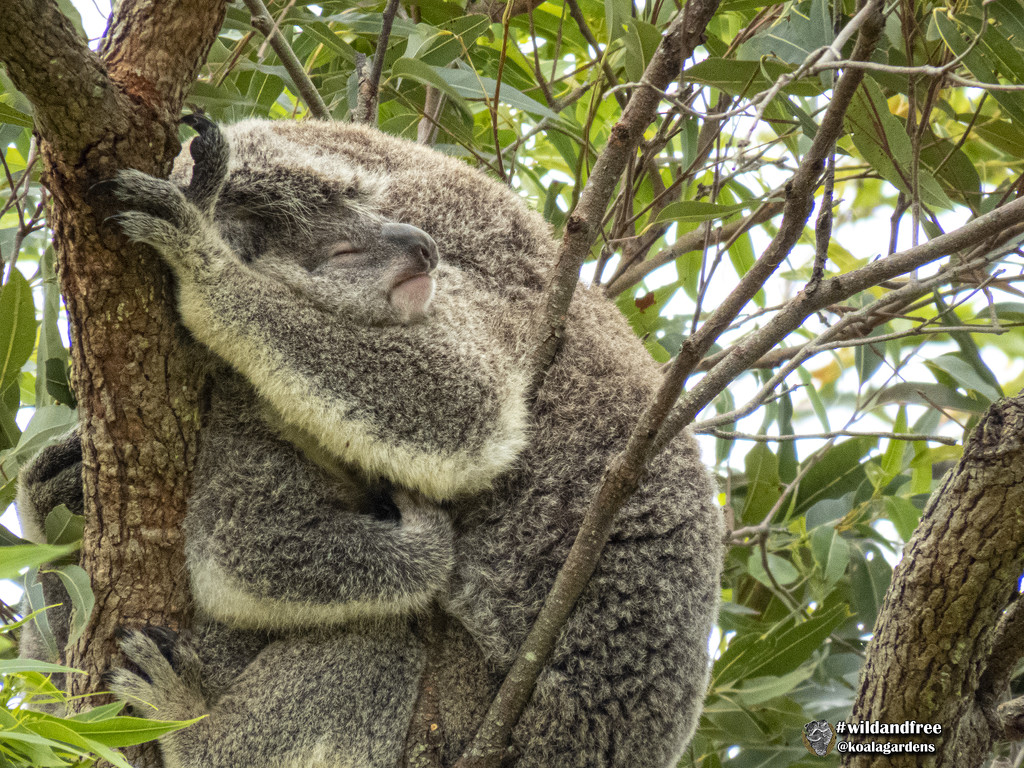 I gotcha by koalagardens