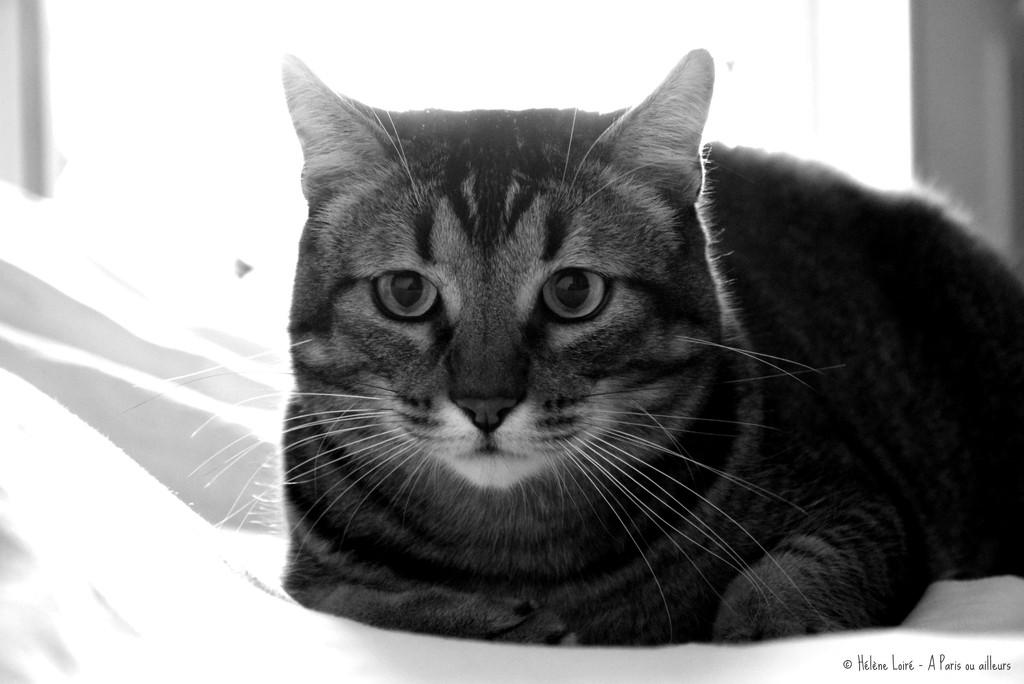 the fat cat by parisouailleurs