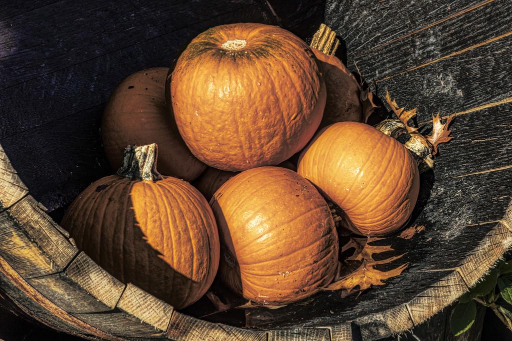 Barrel of Pumpkins by kvphoto