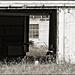 A View Through the Barn Door