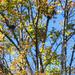 Tree in autumn with bird nest