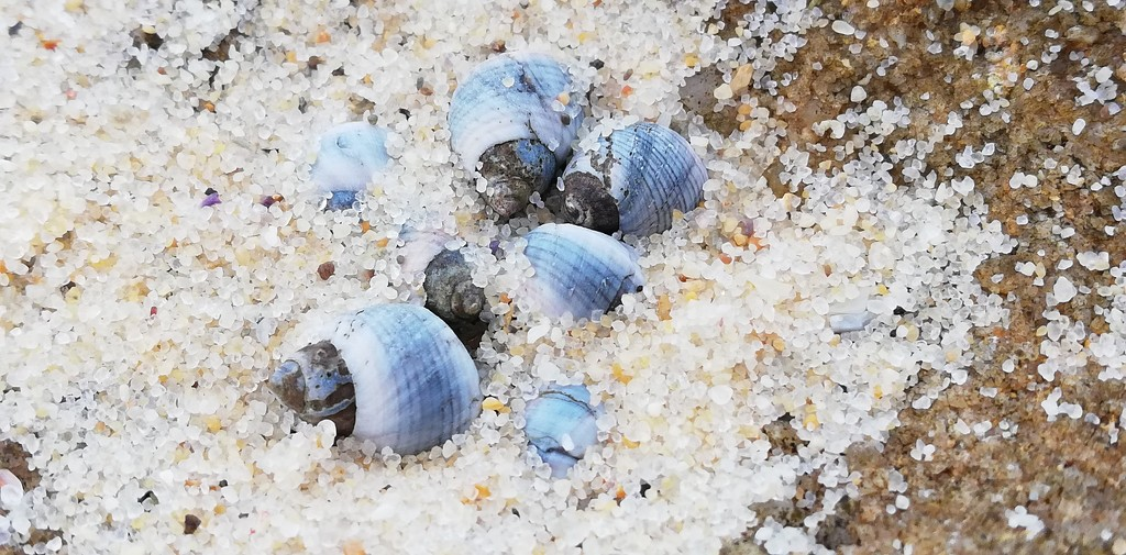 Tiny shells on the sand  by julianneovie