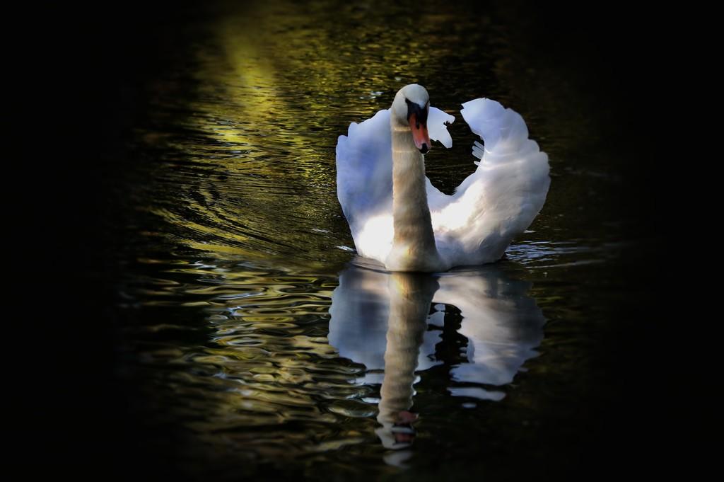 Swanky Swan by lynnz