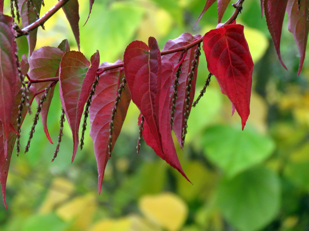 Leaves  by seattlite