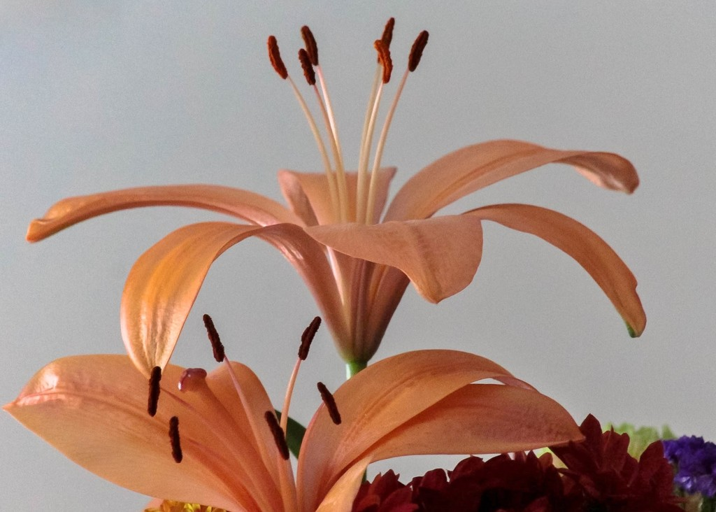 Lilies by mittens