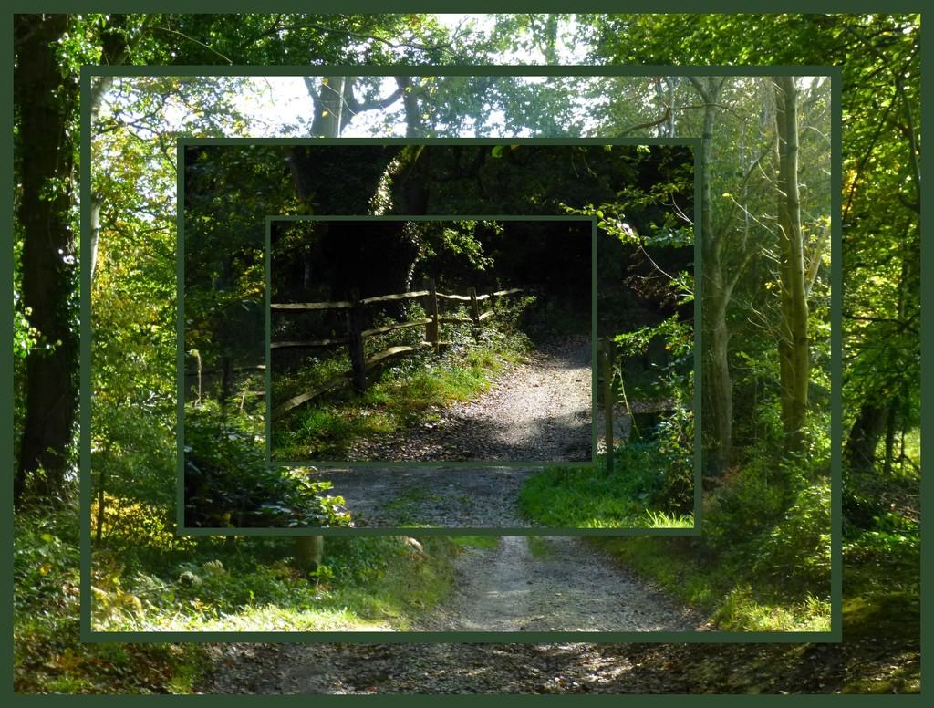 Walk in the Woods by 30pics4jackiesdiamond