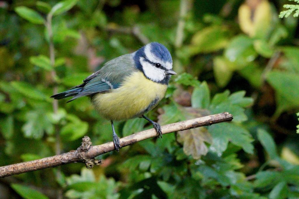 BIRD ON A STICK by markp