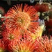 Pincushion Protea by ninaganci