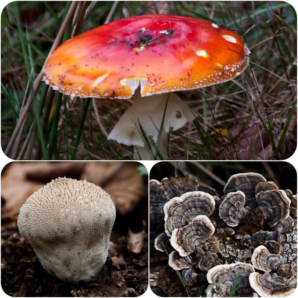 No more fungi by mave