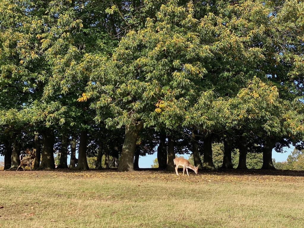Knole Park by bizziebeeme