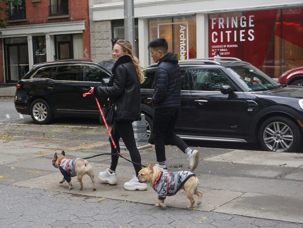 What New York Dogs are Wearing by allie912