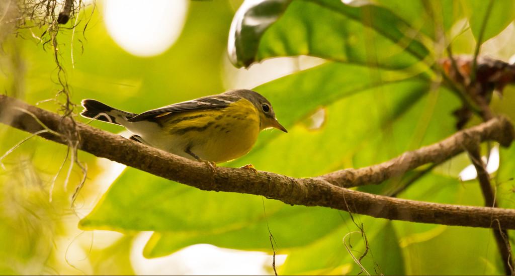 Unknown Bird! by rickster549