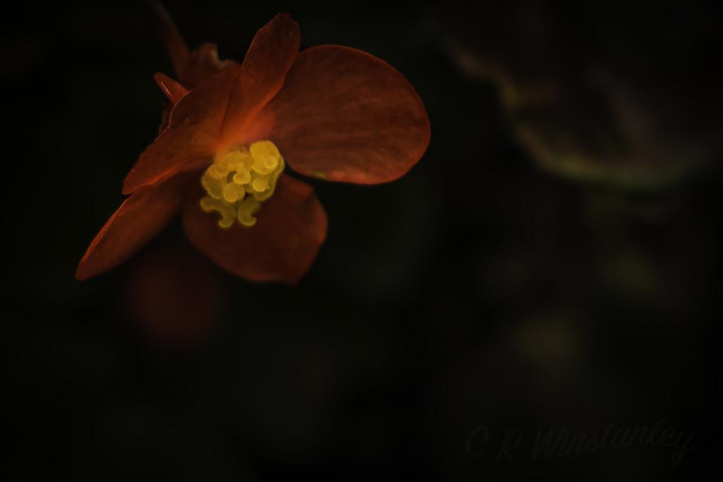 Floral Glow by kipper1951