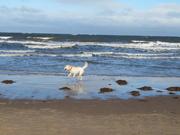 20th Oct 2019 - Roo on the beach