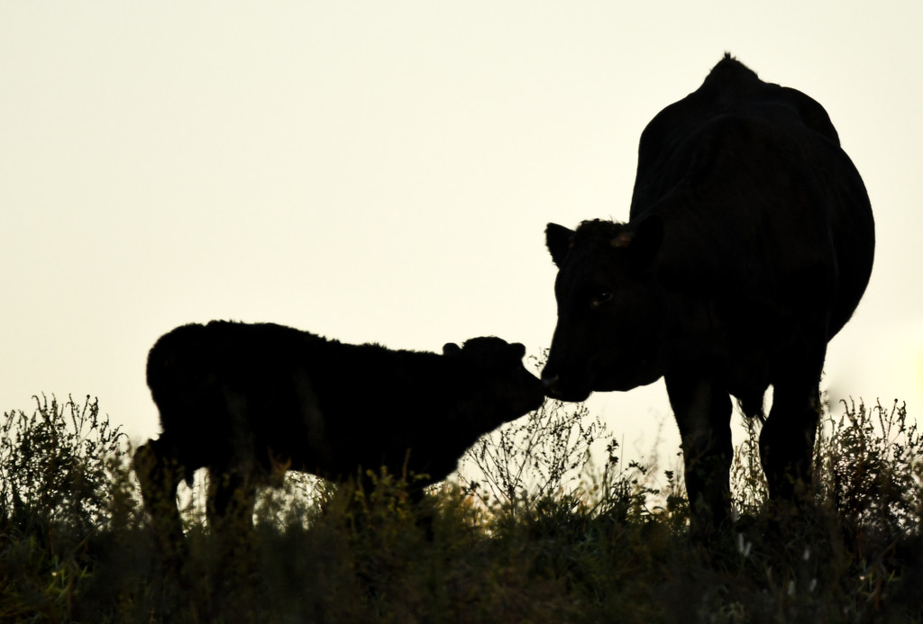 A Mother's Love by kareenking