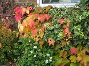 20th Oct 2019 - Autumn colours