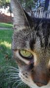 20th Oct 2019 - Where's My Catnip?