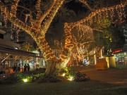 19th Oct 2019 - Tree lights