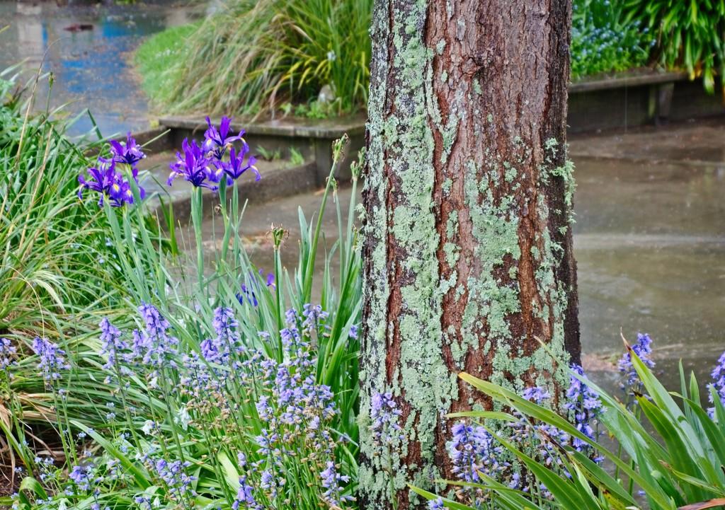 Lichen and Lavender by kiwinanna