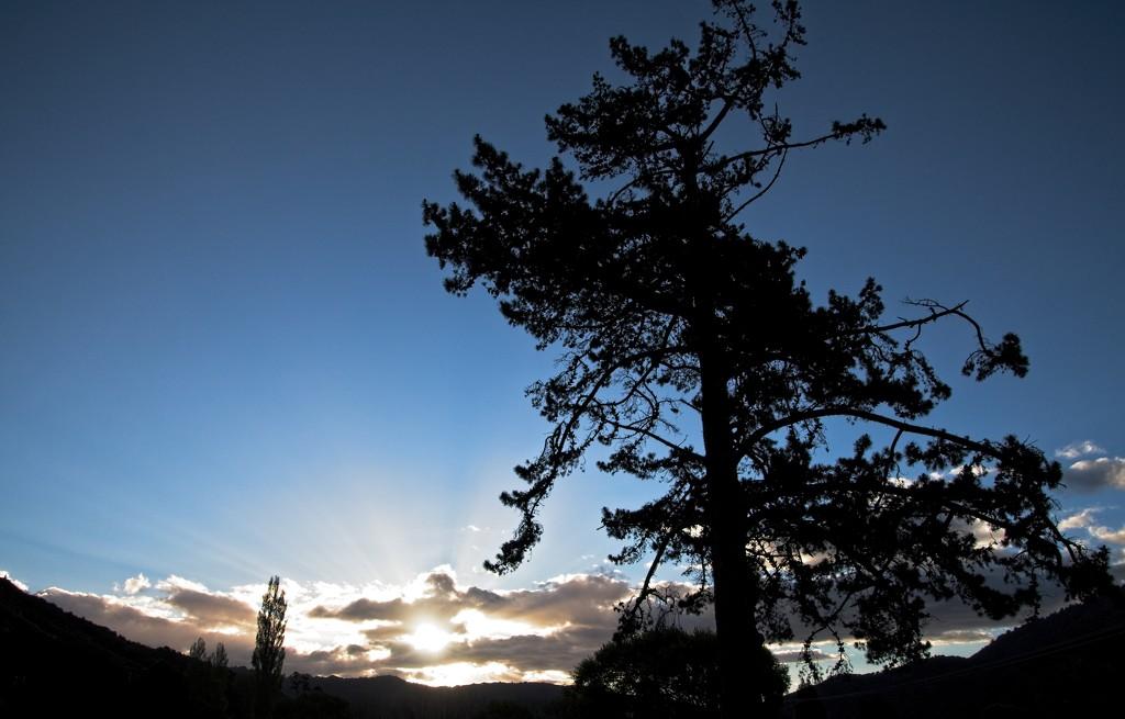Silhouette sunset by kiwinanna