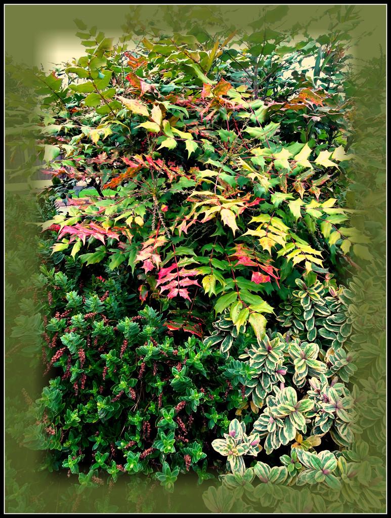 Autumn in my garden  by beryl