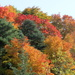 Autumn Colors At Don Valley Toronto by bruni