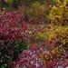 fall foliage by rminer