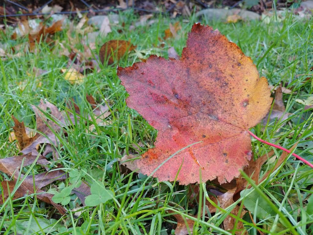 Falling Leaves  by jo38