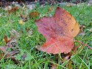 21st Oct 2019 - Falling Leaves