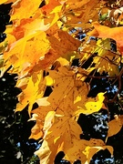16th Oct 2019 - A Color Of Fall