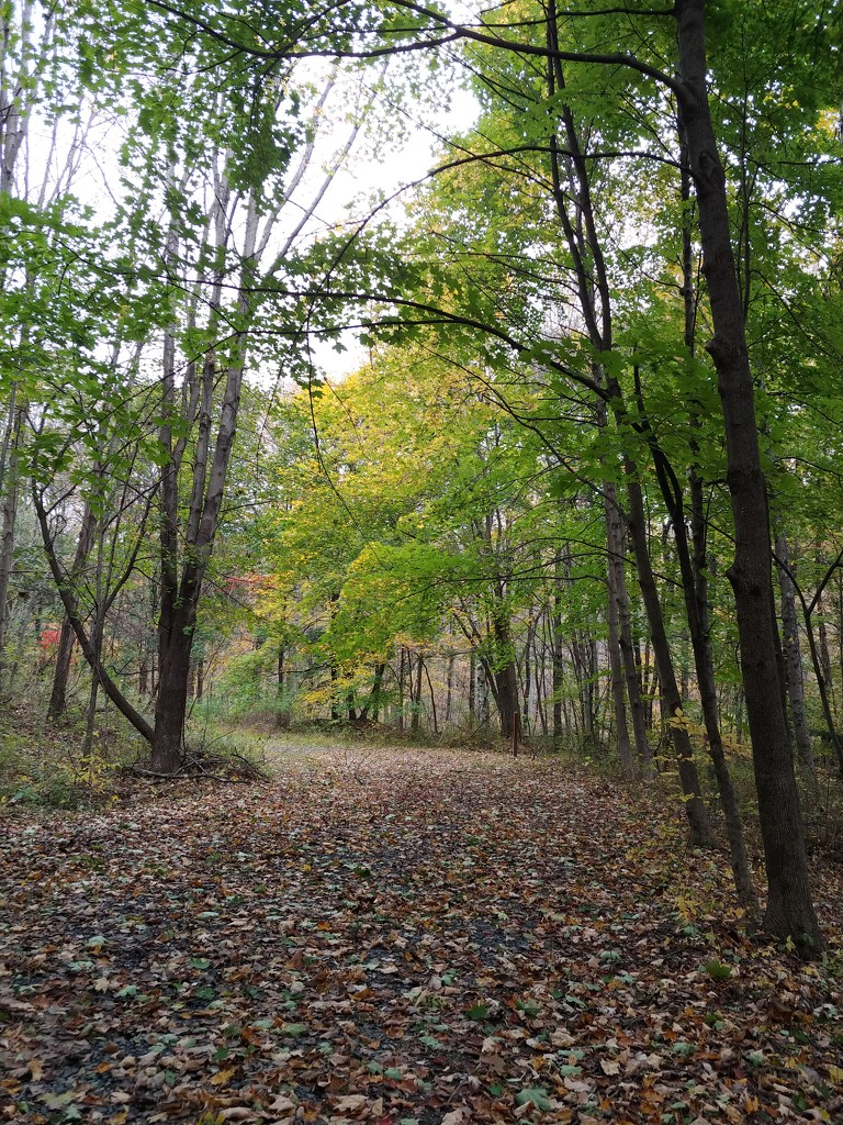 Leaf Covered Walking Trail  by jo38