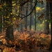 Fall forest by haskar