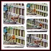 22nd Oct 2019 - Robin in the garden
