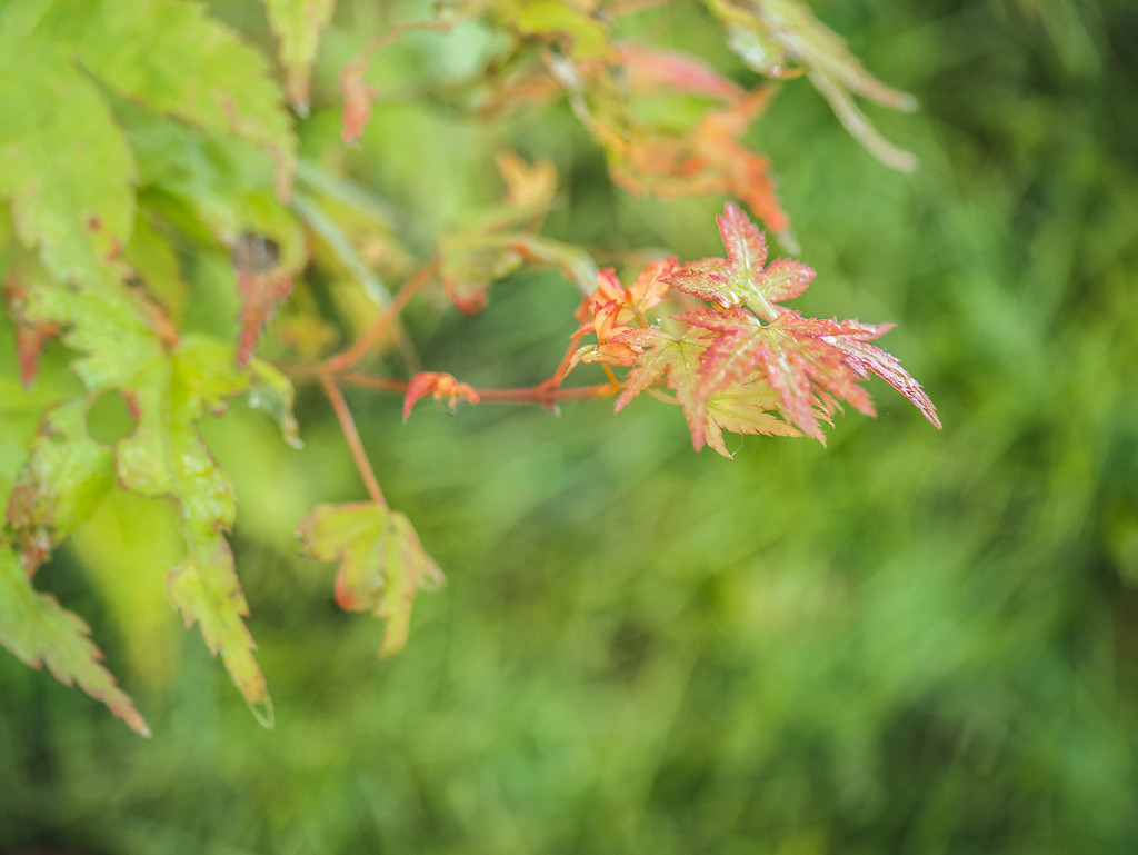 Leaf and Garden by newbank