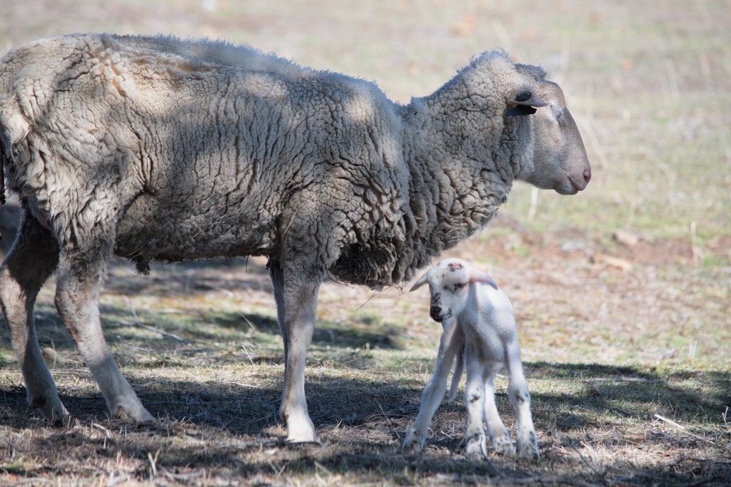 Mum and Baby - A few hours old. by kgolab