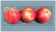 22nd Oct 2019 - Three Pink Lady apples.