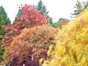 21st Oct 2019 - More Autumn Colours