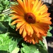 High Hand Nursery Orange