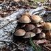 Log and Fungi 2