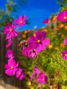 24th Oct 2019 - Love Is Like Wildflowers
