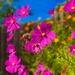 Love Is Like Wildflowers