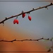 Red Berries by olivetreeann