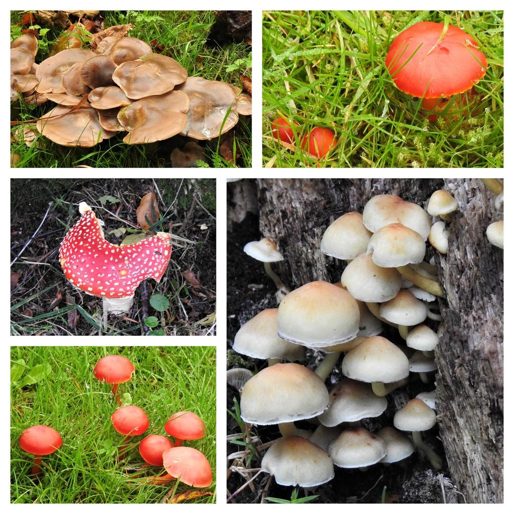 Fungi at Hergest Croft by susiemc
