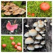 22nd Oct 2019 - Fungi at Hergest Croft