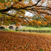 In the Middle of Autumn by rjb71