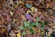 24th Oct 2019 - Autumn's carpet